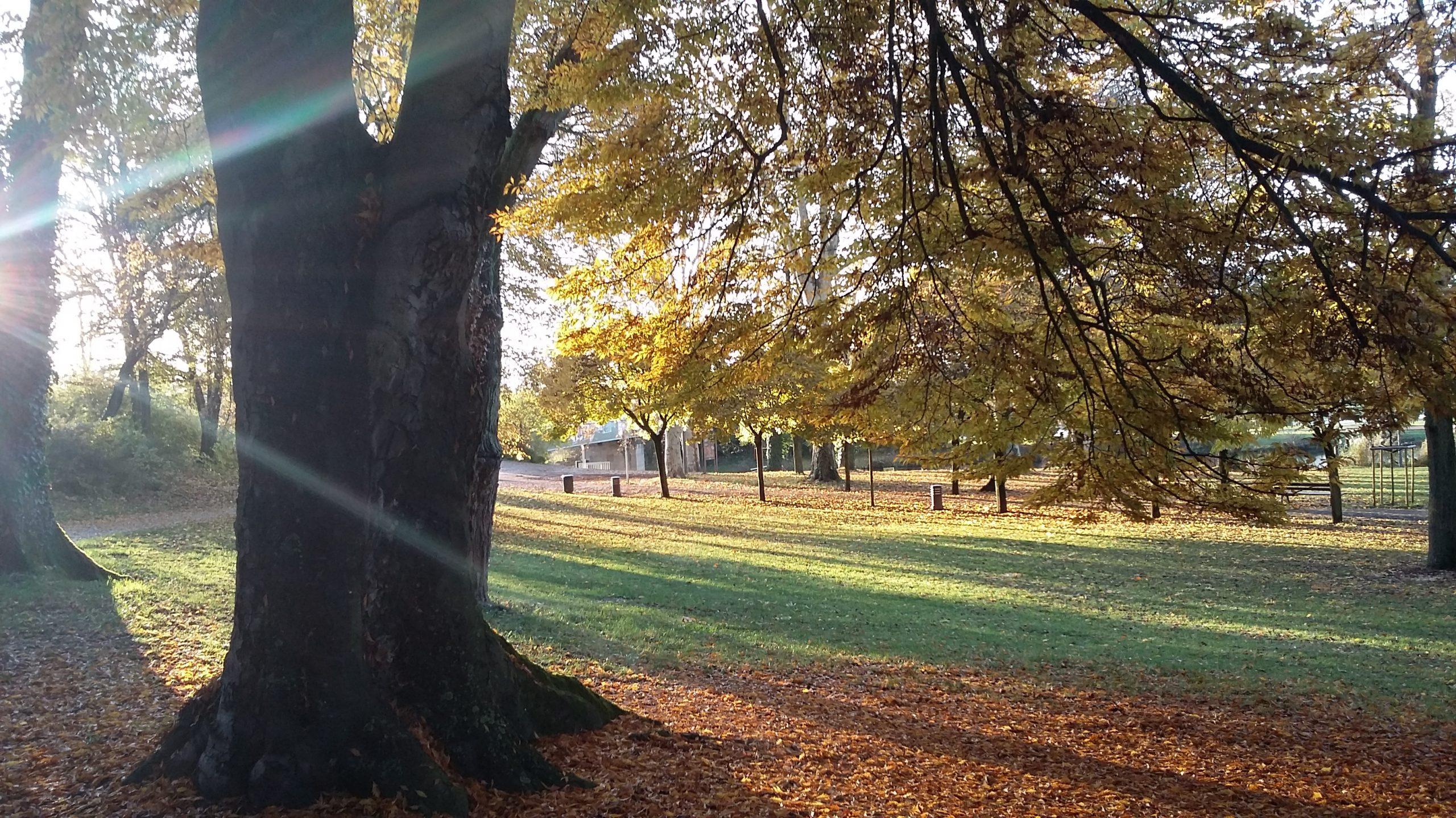 Le quai des régates, couleurs d'automne